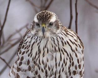 William H. Moore, pionnier du Recensement des oiseaux de Noël au Canada