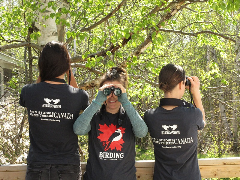 Three young birdathoners sporting fashionable Birdathon T-shirts. The birdathoners on the left and the right are facing away from  the camera, but the one in the centre is posing for the camera, looking straight towards us through binoculars.
