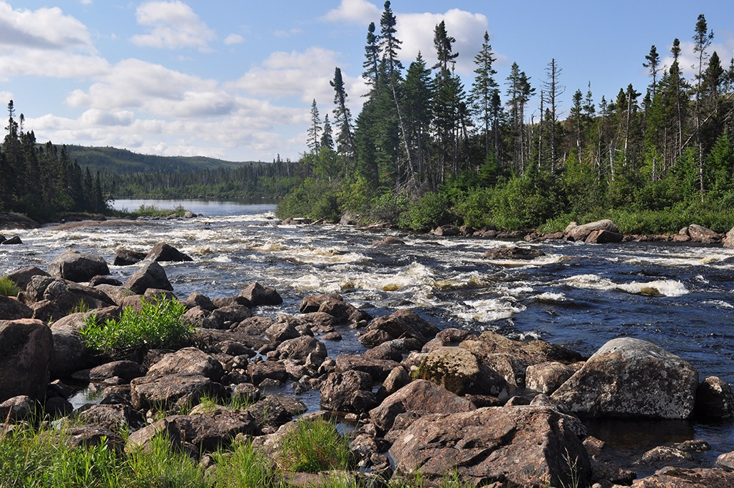 A Boreal Landscape in Etamomiou River, Quebec : River rapids are in the foreground with a forest of tall thin spruce trees in the distance