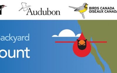 Counting is Caring: Be a Part of the Great Backyard Bird Count
