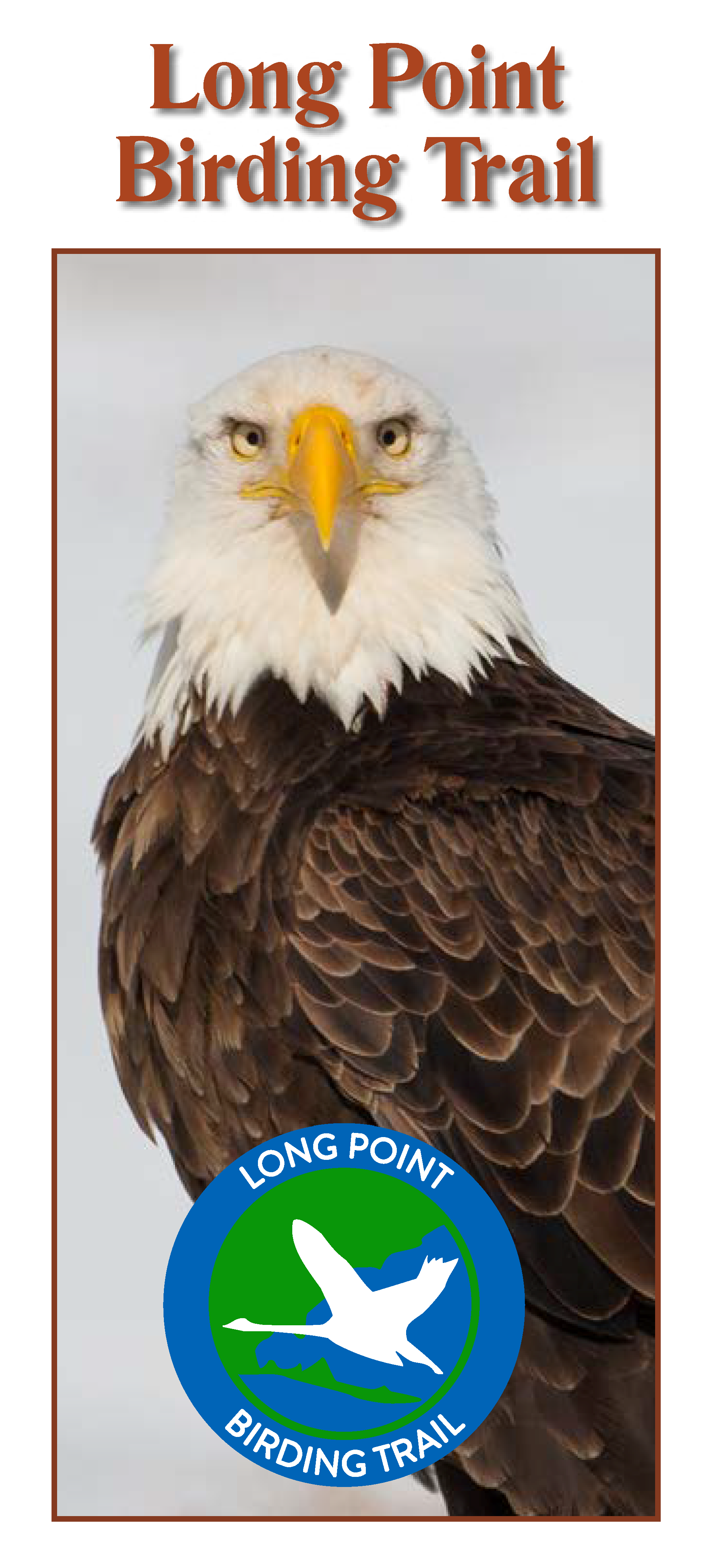 Link to Long Point Birding Trail brochure. On the cover is a portrait of an adult Bald Eagle looking at us with a piercing stare.