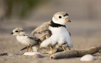 Coastal Stewardship Biologist – Southeastern NB