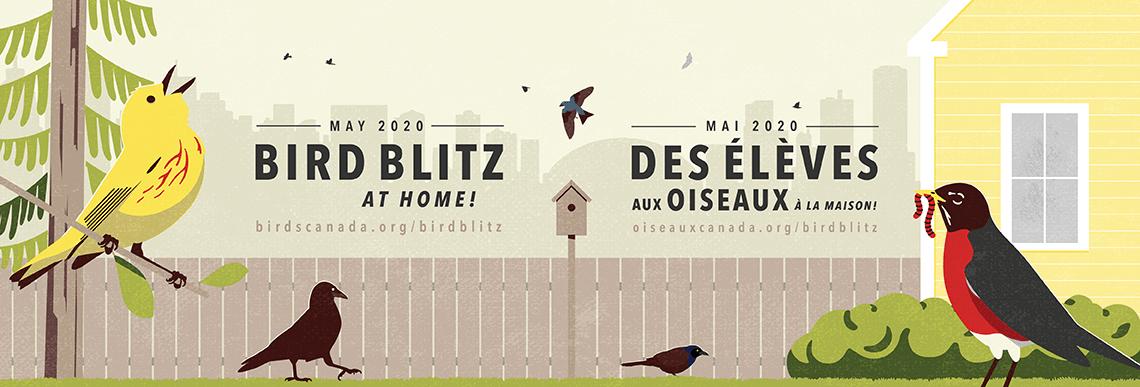 BIRD BLITZ AT HOME – FR