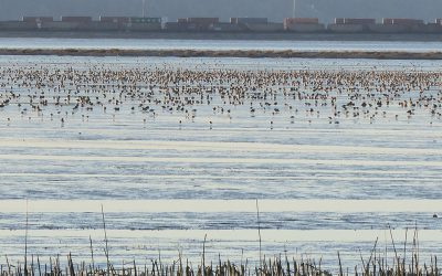 Recommendations in Roberts Bank Terminal 2 report will not sufficiently protect Canada's birds