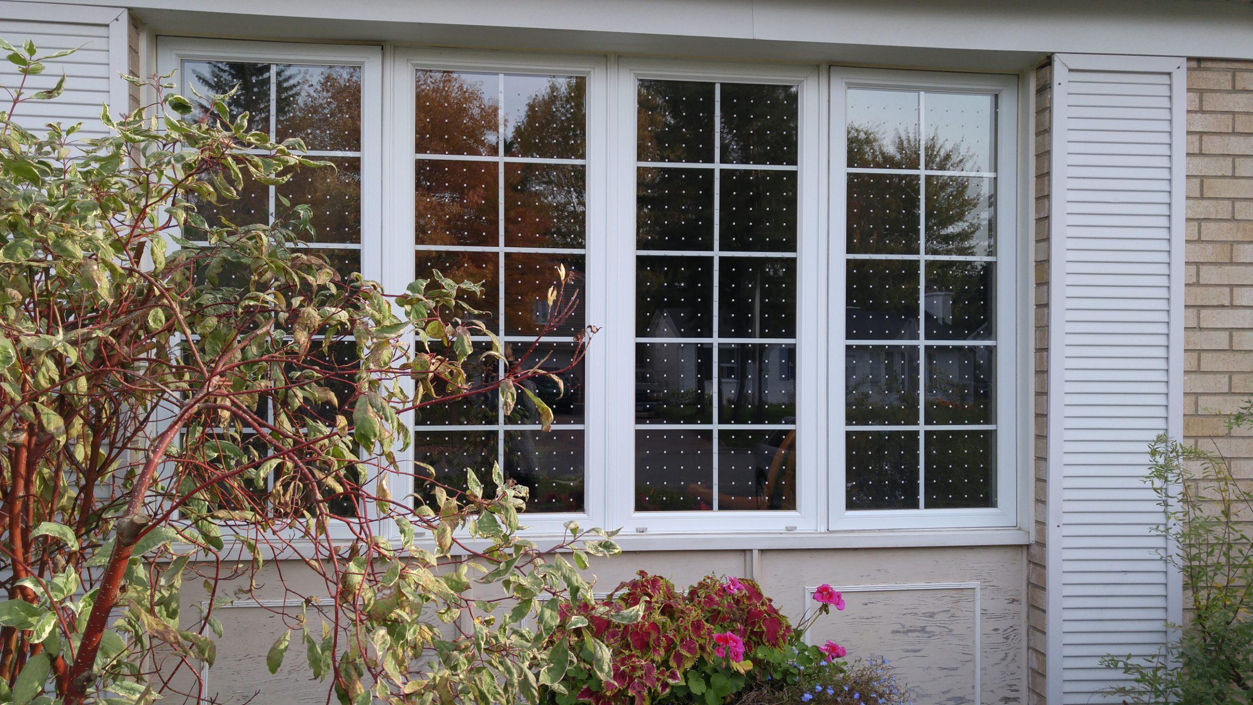 A window with bird collision deterrent tape installed.