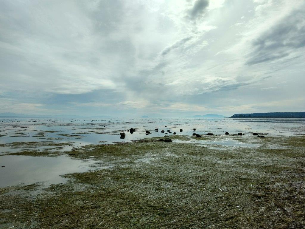 A view of a tidal flat and foreshore on the west coast of British Columbia