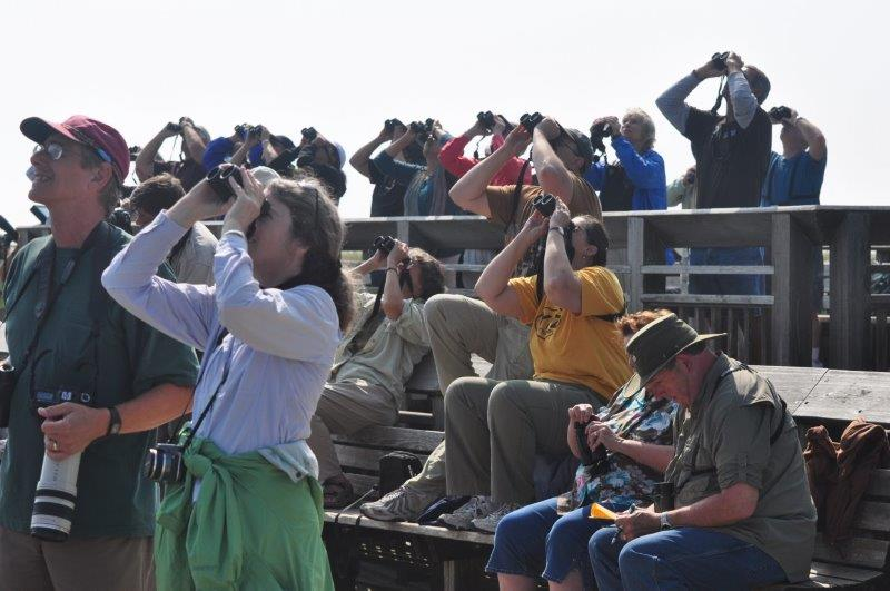 A group of people looking at the sky with binoculars to monitor raptors