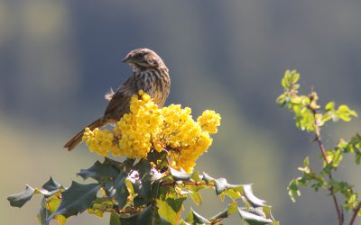 Start Gardening for Birds Today!