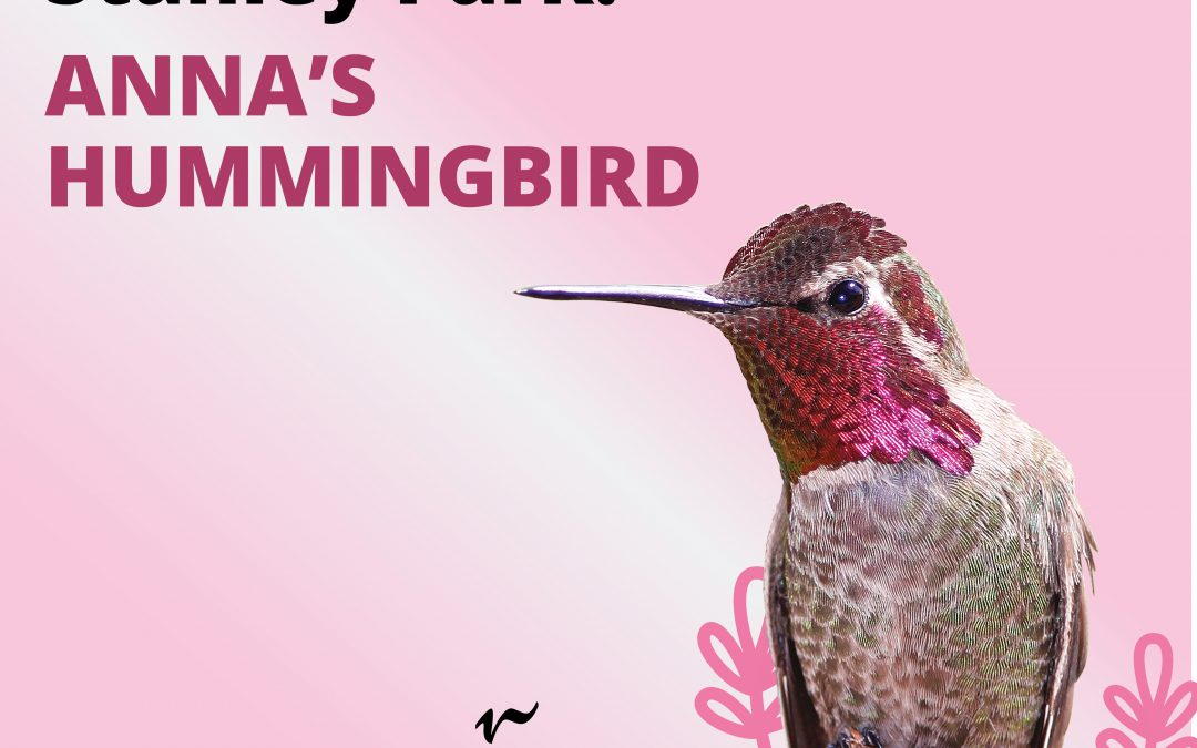Explore the world of birds from home with virtual celebrations