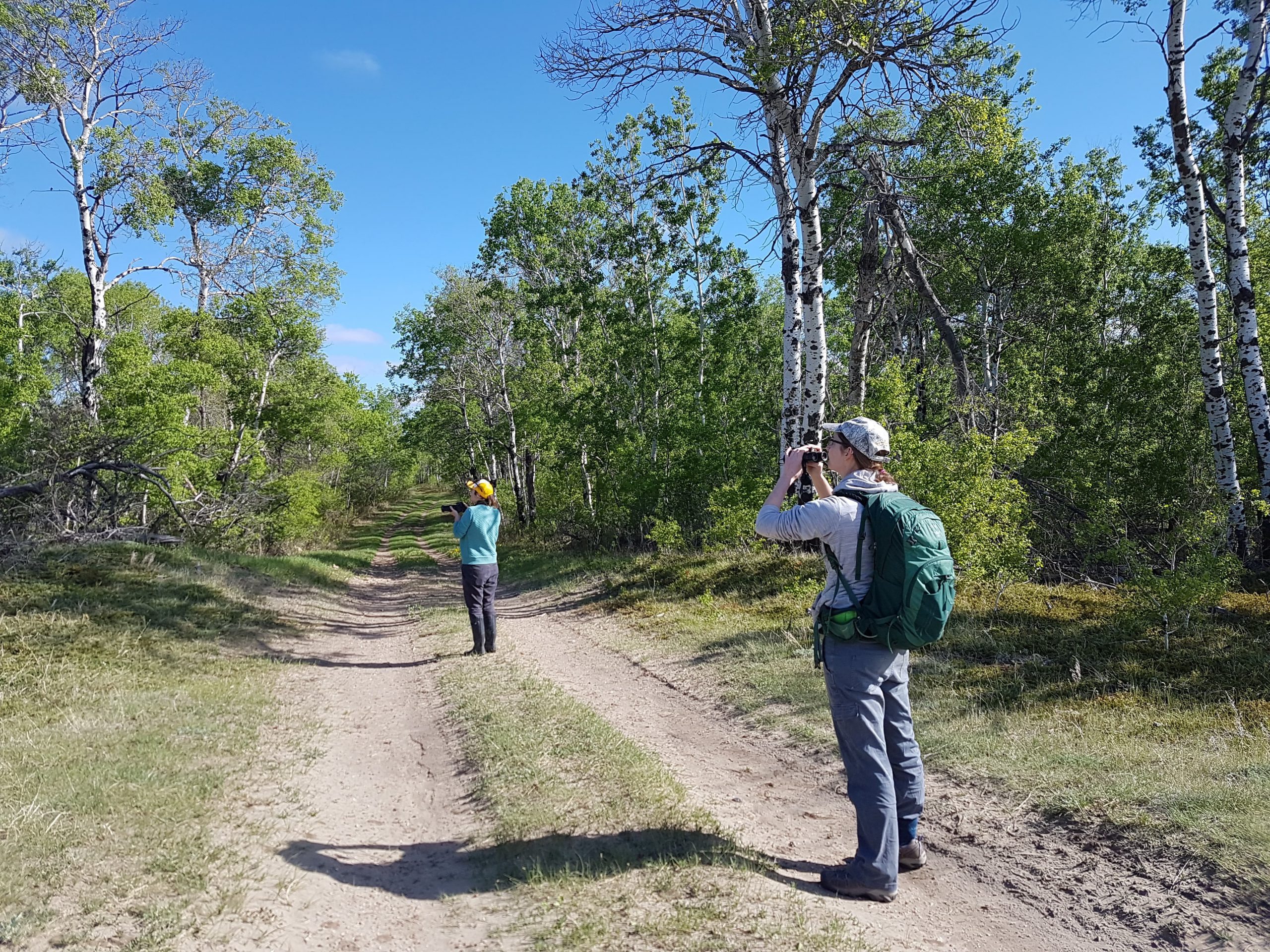 volunteers looking through binoculars on a two-track road in a forest