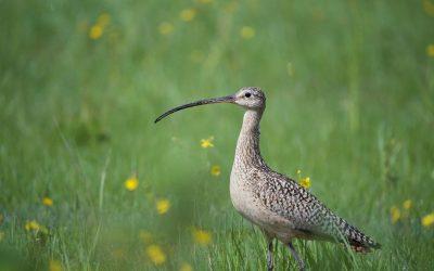 Grassland Bird Conservation Outreach Worker