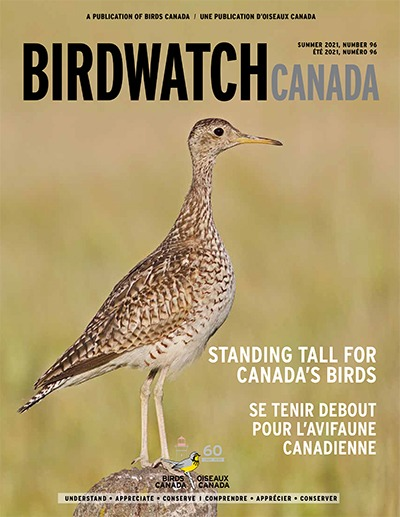 Your contributions shine in the Summer issue of BirdWatch Canada