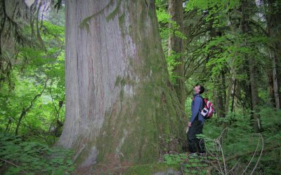 Old Growth Logging in British Columbia