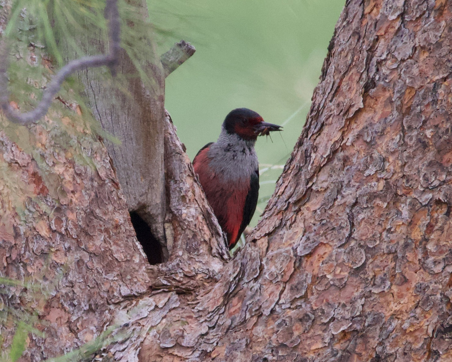 Counting birds at risk in the southern Okanagan