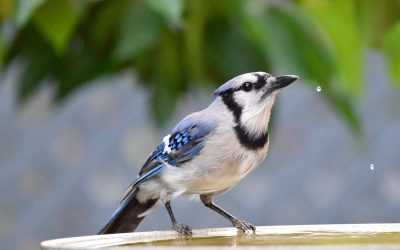 Watch birds out your window and be part of scientific research!